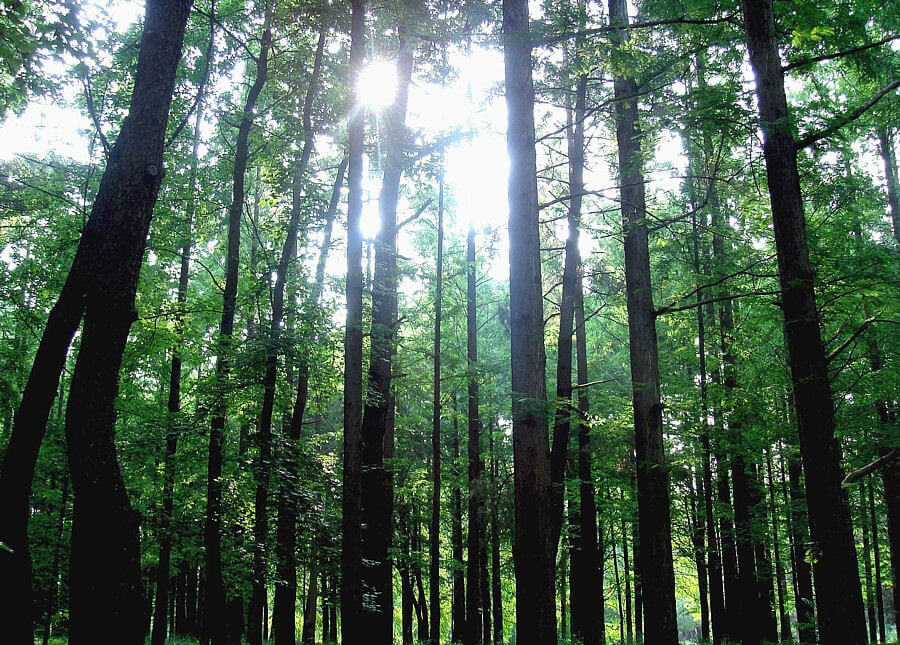 Forest in Osaka Japan